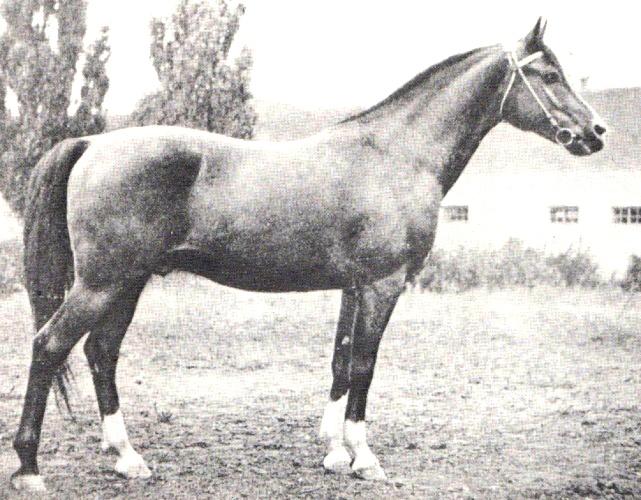 Arax (fot. archiwum)