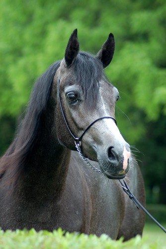 Biruta – 2nd pl. fillies 2yo A, by Zuzanna Zajbt