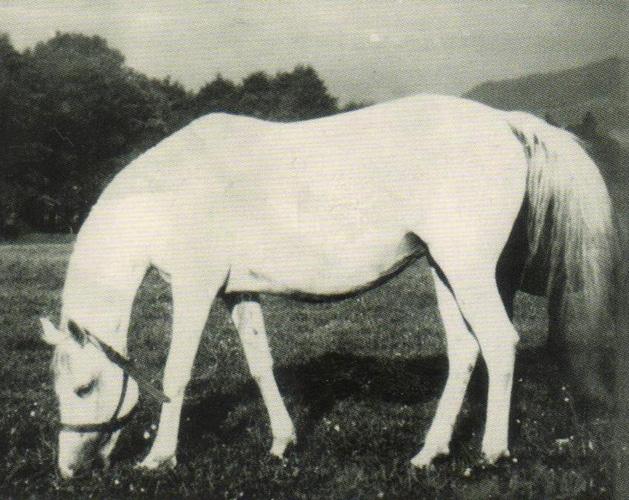 Klacz Carmen w stadninie Nowy Dwór (fot. archiwum)