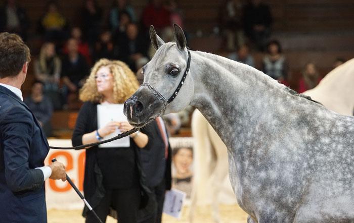 Chaos Persefona, The Best Horse from Poland, by Krzysztof Dużyński