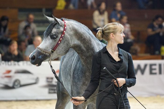 DA Jakarta, Bronze Austrian Champion Filly , b Krzysztof Dużyński