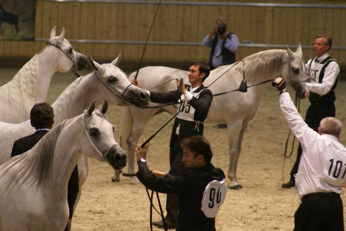 Czempionat klaczy starszych, Aachen 2009. Fot. Krzysztof Dużyński