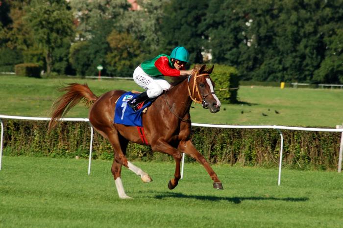 Podsumowanie sezonu 2008: konie 4-letnie. Przeciętny rocznik derbowy
