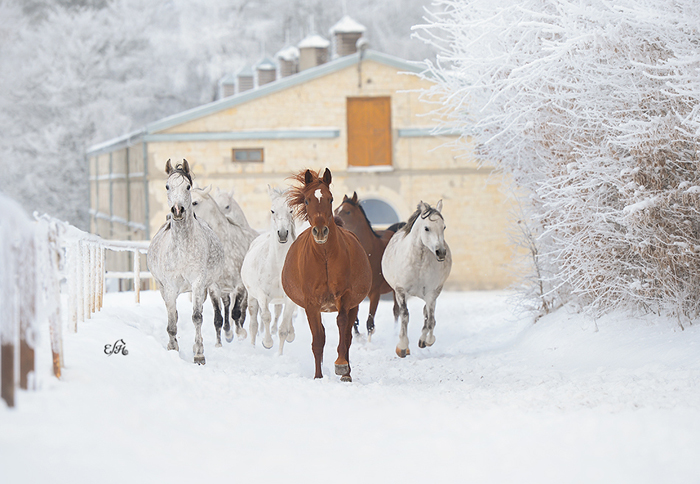 Białka zimą, fot. Ewa Imielska-Hebda