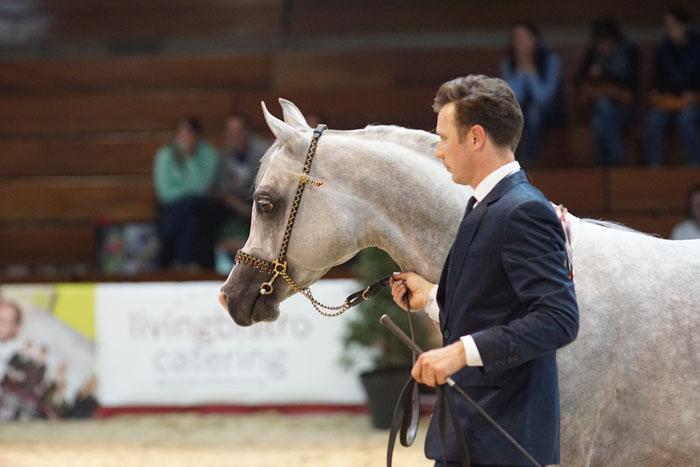 Echo Mars, Bronze Champion Stallion, by Krzysztof Dużyński