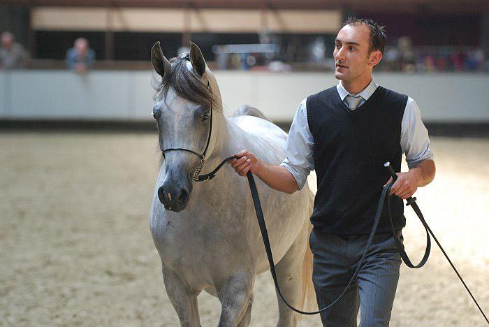 El Saghira, Res. Junior Champion Filly, by Mateusz Jaworski