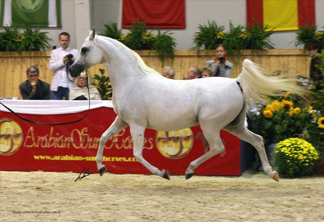 Pride of Poland 2005