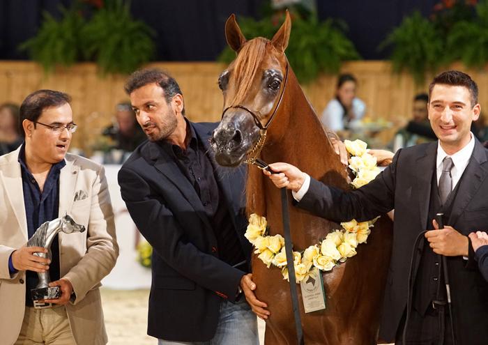 Elle Flamenca, z lewej reprezentanci Dubai Stud, z prawej Paolo Capecci, fot. Krzysztof Dużyński