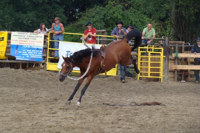 Pierwsze zawody z cyklu Extreme Rodeo w konkurencjach z cielakami - Zabrze-Rokitnica 2009