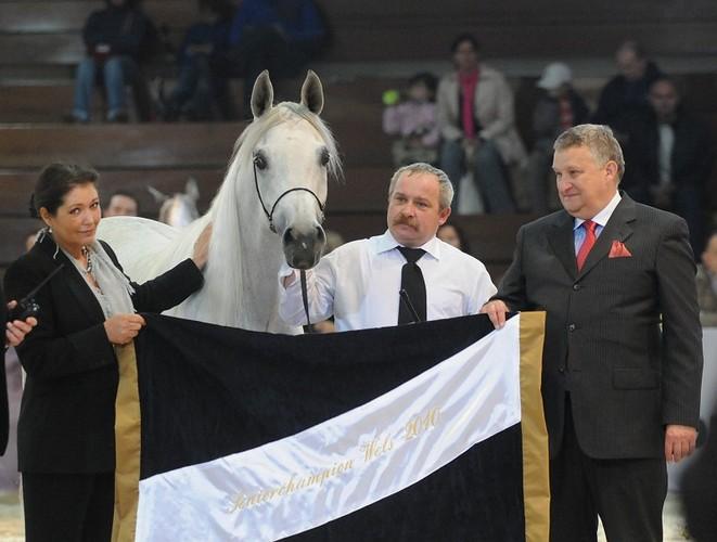 Najlepszy w historii wynik Polaków w Wels! Złoto dla Emandorii. Zobacz galerię zdjęć