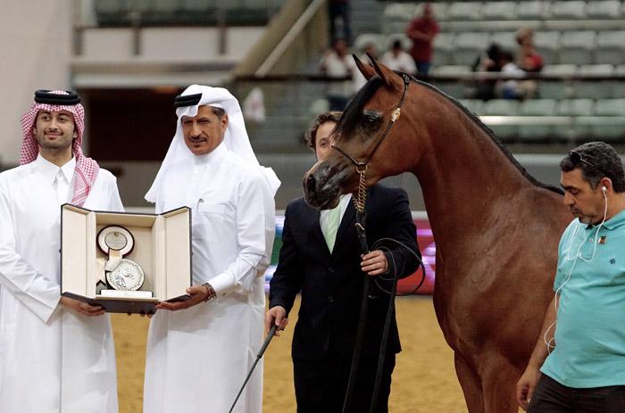 Nasza relacja z marcowego katarskiego festiwalu konia arabskiego w dziale Pokazy