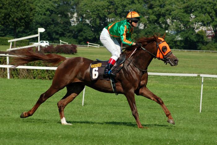 Podsumowanie sezonu 2008 – konie trzyletnie. Nader obiecujący urodzaj?