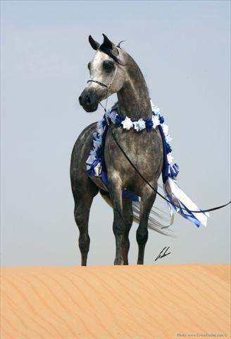 Udany występ polskich koni w Anglii