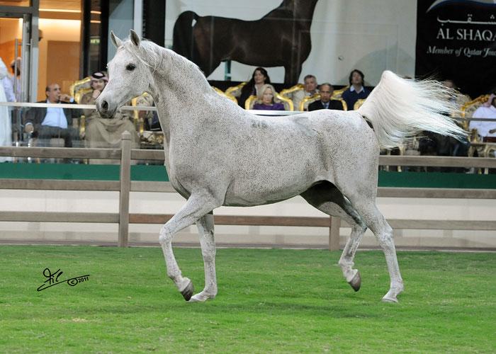 Pilar królową Al Shaqab