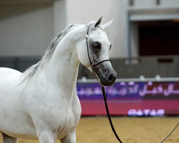Farhoud Al Shaqab, fot. Monika Luft