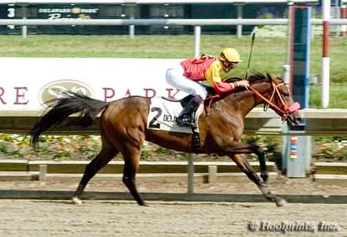 ZEA – Ranking koni czystej krwi arabskiej w sezonie 2008/2009