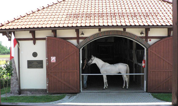 Galba in Polska AKF. Photo from the stud's archive