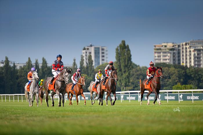 Konie uczestniczące w gonitwie o Puchar Al Khalediah Poland, fot. Ewa Imielska-Hebda