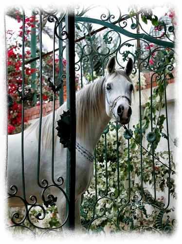 Twój koń też może być gwiazdą