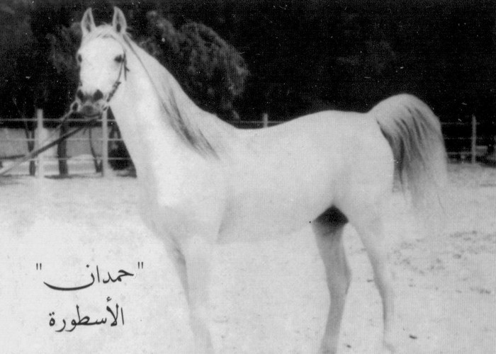 Hamdan, fot. archiwum