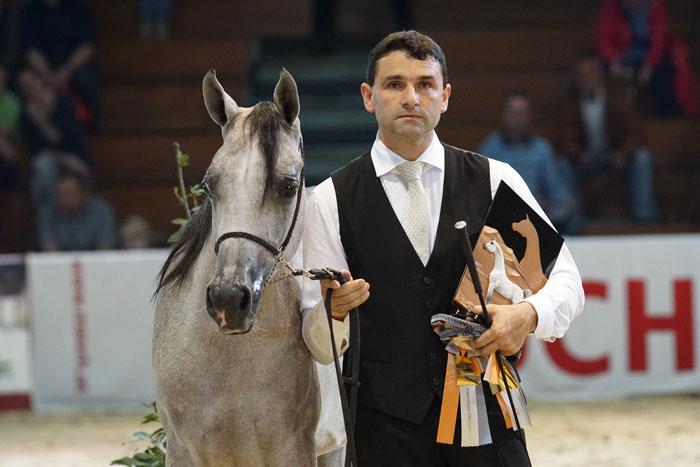 Hanaya Labid, Silver Austrian Champion Colt, by Krzysztof Dużyński