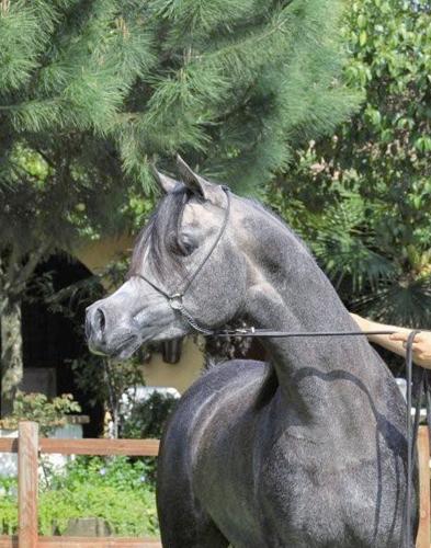 Hassan Ashiraf w Nana Arabians