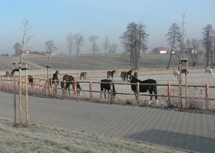 AKF Poland - horses at the pasture. By Władysław Guziuk