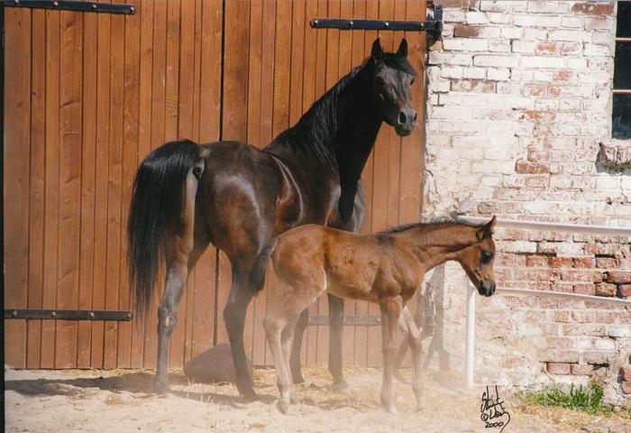 Zaliczka with her daughter Zulejda 2000 by Empres. By Stuart Vesty