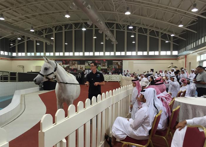 Aukcja Al Shaqab i Al Rayyan 2016. Katarska klacz przyjedzie do Polski