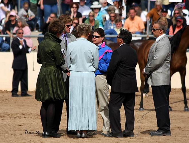 The discussion among the judges and the vet. By Nancy Pierce