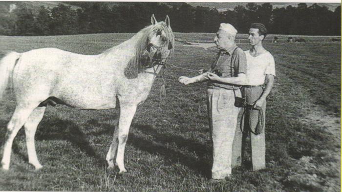 Józef Tyszkowski i jego epopeja. Wojenne losy polskich koni arabskich 1939-1946, cz. 1