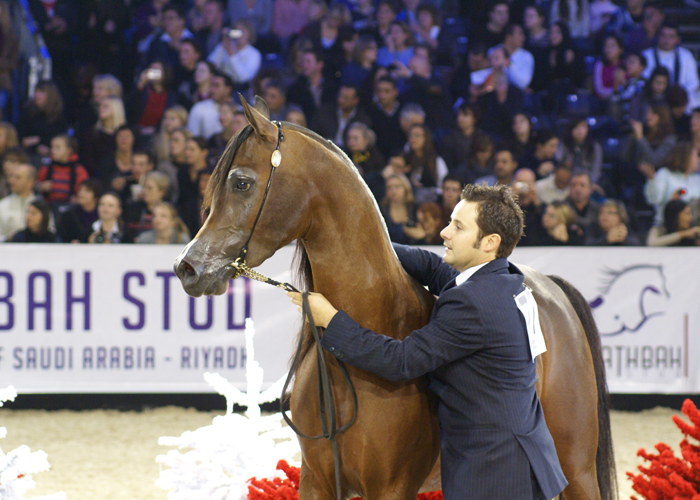 Kahil Al Shaqab w Paryżu 2011, fot. Krzysztof Dużyński