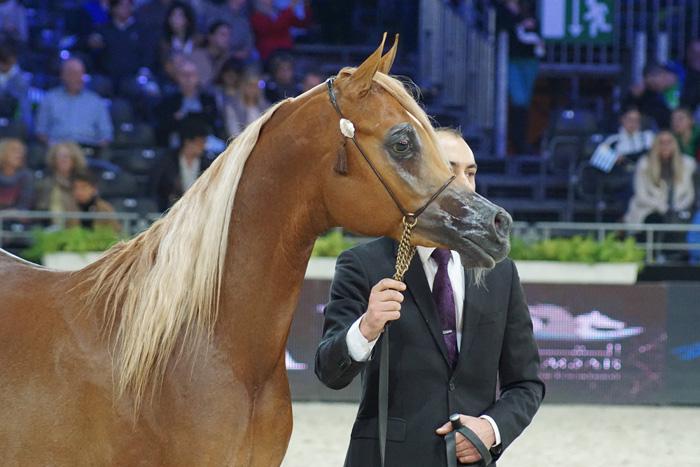 Kanz Al Nasser, fot. Krzysztof Dużyński
