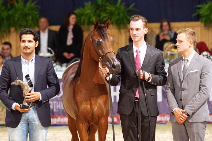 Luigi, z lewej reprezentant Al Shahania Stud, z prawej Tom Oben, fot. Krzysztof Dużyński