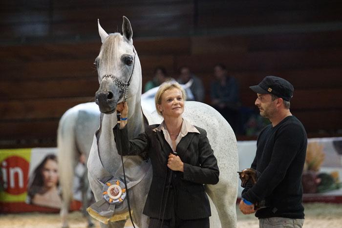 Marjan Albidayer, Silver Champion Stallion, by Krzysztof Dużyński