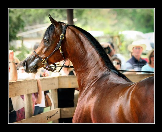 Marwan Al Shaqab by Nancy Pierce
