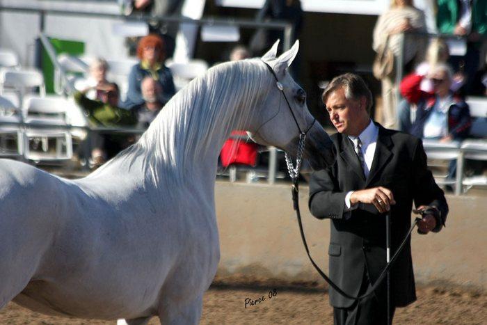 Scottsdale: konie dobre czy złe? Refleksje uczestnika wyprawy