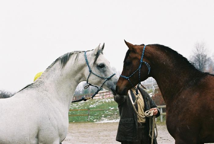 Ontario HF i MVA Prince Vayu, fot. Tadeusz Budziński