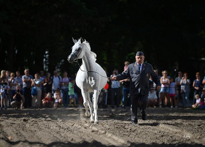 Pokaz przed aukcją - Palanga, fot. Ewa Imielska-Hebda