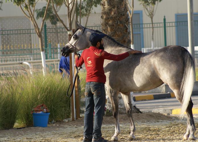 Perfinka, Katar 2015, fot. Monika Luft