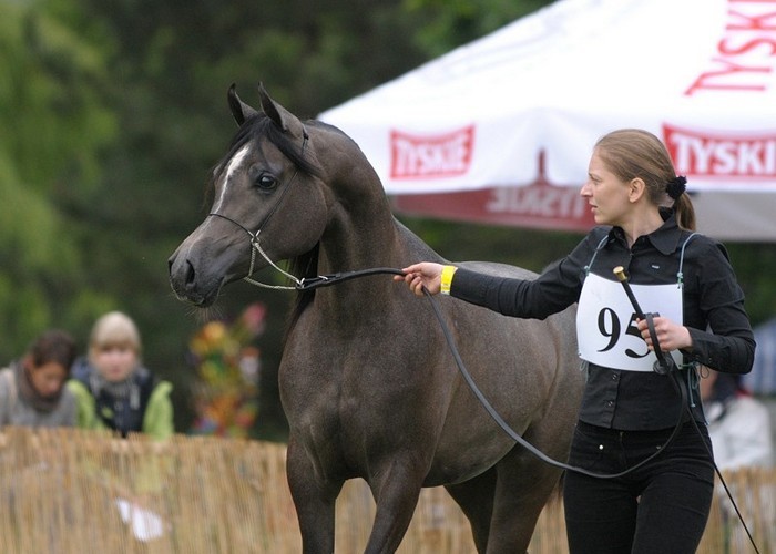 Psyche Kreuza,Best in Show, Junior Champion Filly by Sylwia Iłenda