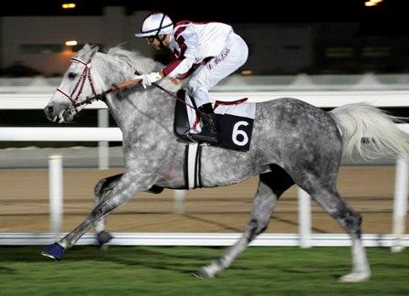 Ogier Dahess, fot. arch. Qatar Racing and Equestrian Club