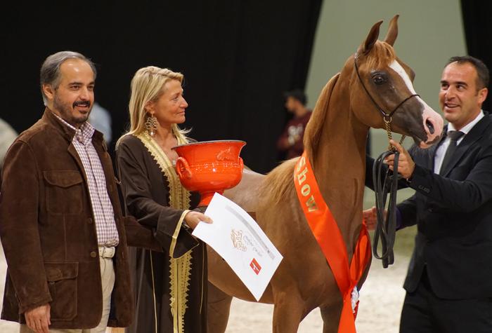 Best in Show: SS Coronado Al Jamaal, by Monika Luft