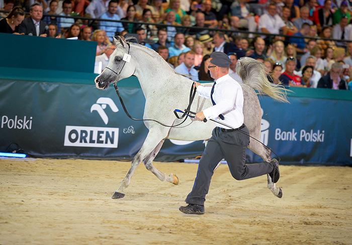 Koń ma cztery nogi, a też się potknie. Relacja ze Święta Konia Arabskiego w Janowie Podlaskim (12-15.08)