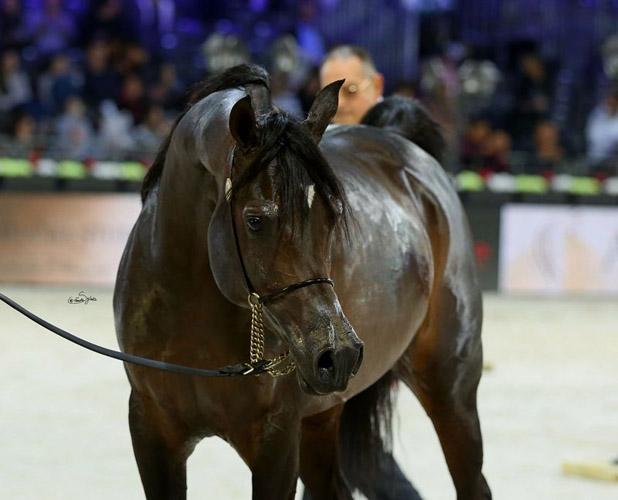 Sultan Al Zobara, fot. Sylwia Iłenda