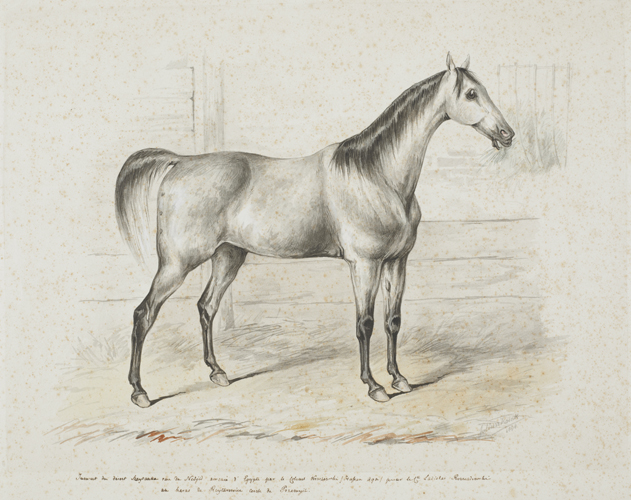 Juliusz Kossak: The grey mare Szaytanka (1844). Photo from the Regional Museum of Tarnów (Muzeum Okręgowe w Tarnowie) collection, Poland