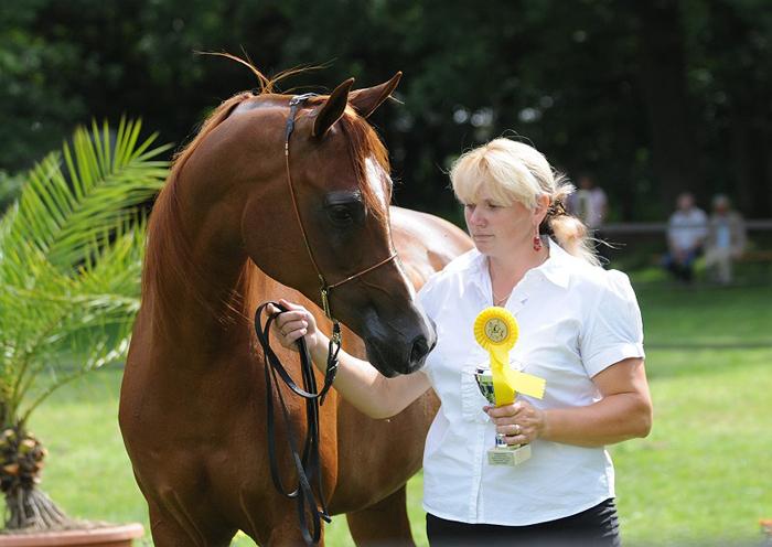 Arabian Impressions: czempionat, dwa wice i jeden brąz dla koni z Polski!