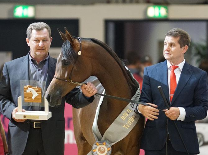Bronze Champion Yearling Filly Westura, by Krzysztof Dużyński