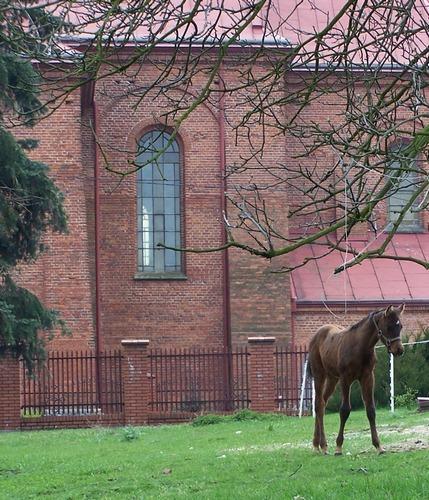 Ludzie i konie: Księże stajnie