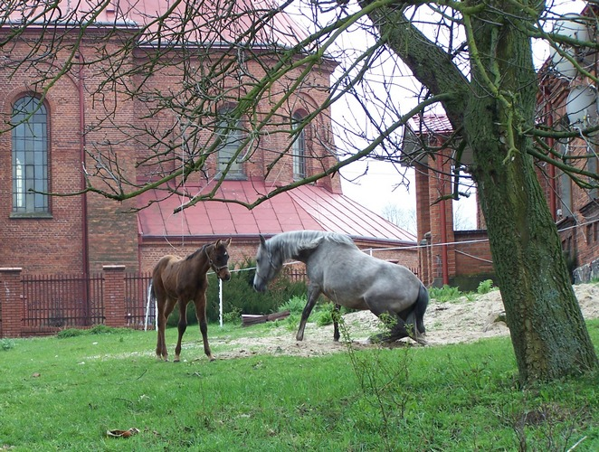 Zeksterna with a foal, by Ewa Bagłaj